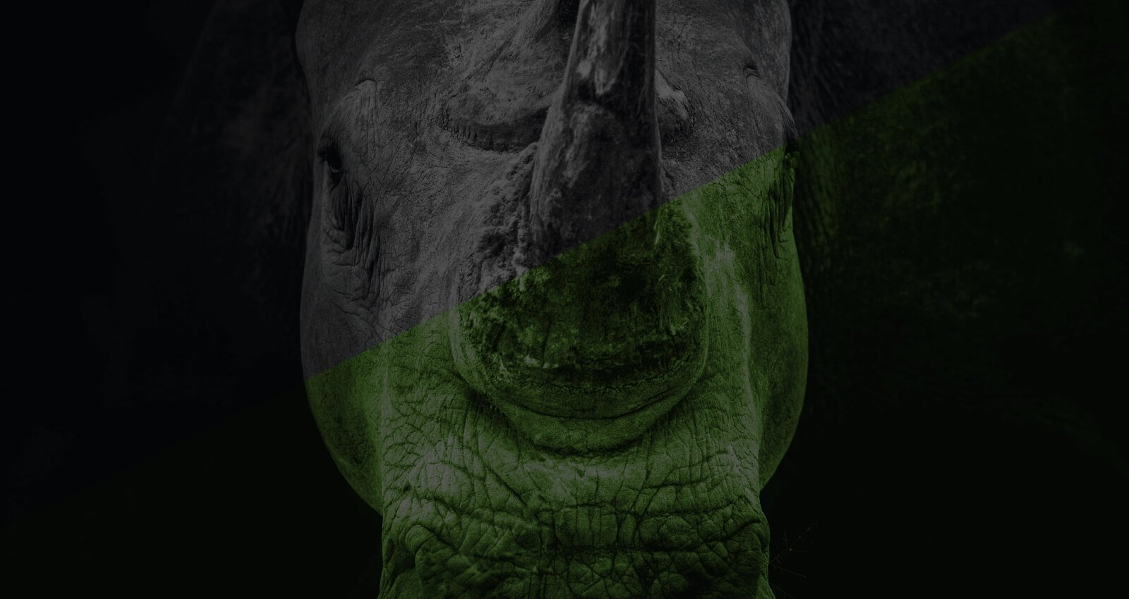 Rhino-Home-2020